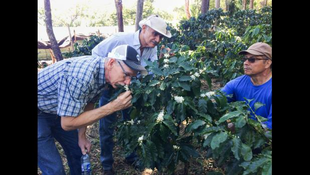 Marvin Rasmussen stops and smells a flowering coffee plant on a coffee farm in El Salvador. Marvin and wife Beth also met the workers who pick coffee cherries by hand and encountered a young mother who, at the age of 17, lost her husband this past summer to gang violence. CONTRIBUTED PHOTOS