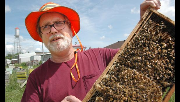 Cail Calder, owner of Bee Mindful in Scranton, talks last June about beekeeping while nonchalantly holding onto live bees. He fears he's out of business after the city of Scranton abated what it deemed a nuisance property. HERALD FILE PHOTO