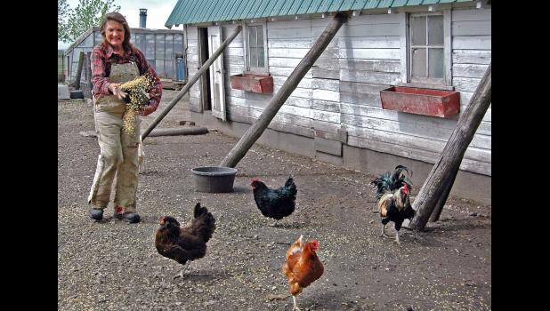 Mary Hillman feeds a few of her laying hens on a recent morning. Her poultry, eggs and produce are on the menus of restaurants in Des Moines. She soon will be taking 470 chickens to be butchered. ANDREW McGINN | JEFFERSON HERALD PHOTOS