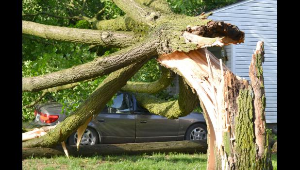 "During Monday night's storm, Bob Wahl's maple tree toppled onto his neighbor's driveway, totaling two of Alex Hamilton's cars and causing minor damage to another. Hamilton said the police came to his North Locust Street home around midnight to notify him of the damage. ""When the cop was standing at the door, I'm looking behind him and thought, 'Well, that's not where that tree's supposed to be,'"" Hamilton said Tuesday morning."