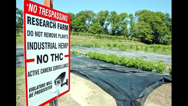 A sign at Krieger Greenhouses and Flower Shop in Jefferson warns would-be trespassers that, in short, stealing and smoking their hemp would be a drag. It contains just 0.3 percent THC, the compound in marijuana that produces a high.