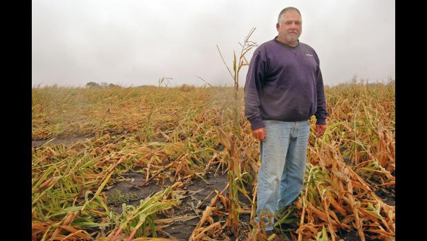 John Muir, a lifelong local farmer and current chair of the Greene County board of supervisors, stands on a dreary day last week next to what appears to be the last-standing stalk of corn in a field. Muir gets anxious when he thinks about trying to harvest corn flattened by last month's derecho. ANDREW McGINN | JEFFERSON HERALD PHOTOS