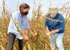 Democratic Senate candidate Theresa Greenfield (left) examines weather-diminished crops Saturday south of Jefferson with Greene County farmer and county supervisor candidate Chris Henning. DOUGLAS BURNS | JEFFERSON HERALD